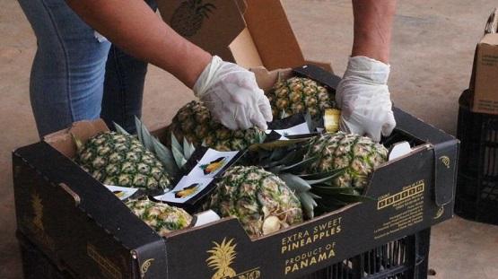 2020首批巴拿马菠萝即将抵华,正式开启中国市场销售